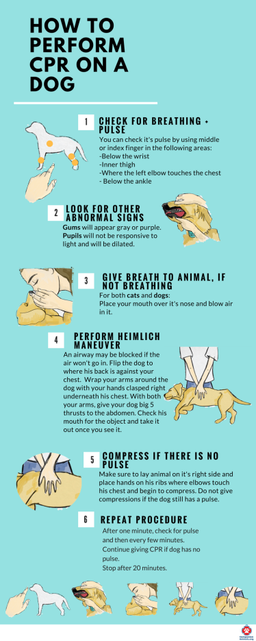 How-to-Perform-cpr-on-your-pet-1-1.png